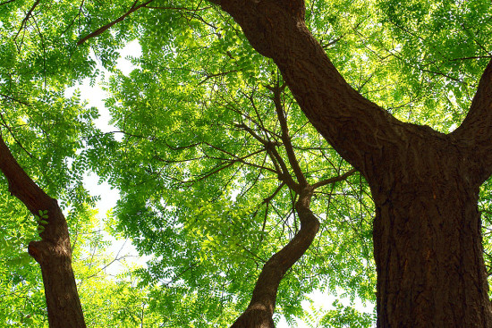 Planting a tree can add to your landscaping and your curb appeal.
